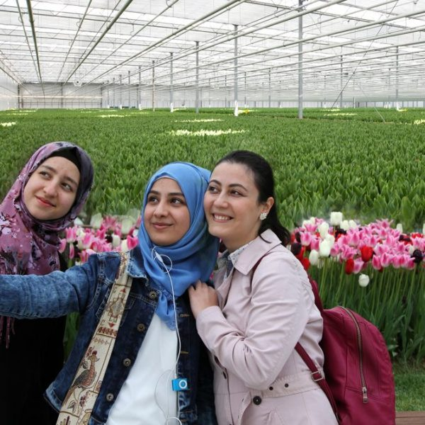 Tulip Farm Amsterdam liggend formaat LR
